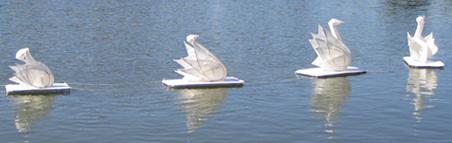 May Fair Swans